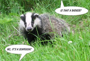 Badgers are scapegoats